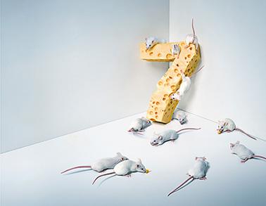 OMNITEL-7s-mice copy